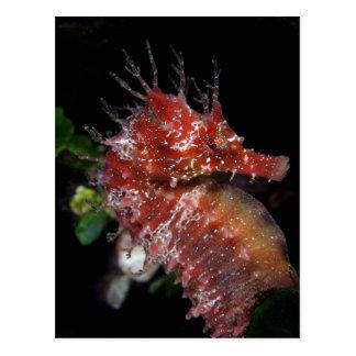 Femelle Begur de poney de l'hippocampe | Cartes Postales