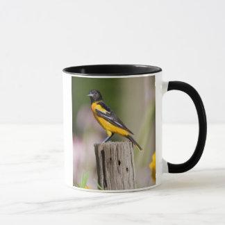 Femelle de Baltimore Oriole dans le jardin Mug