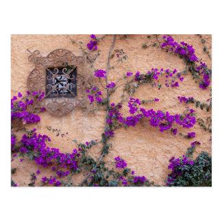 Fenêtre ornementale avec la bouganvillée carte postale
