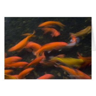 Feng Shui croient que des poissons de koi portent Carte De Vœux