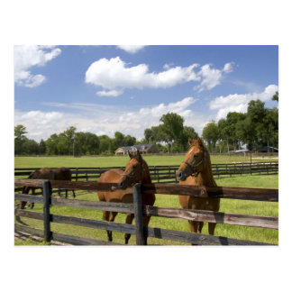Ferme de cheval de pur sang dans le comté de carte postale