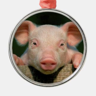 Ferme de porc - visage de porc ornement rond argenté