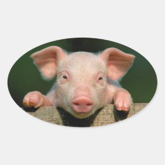 Ferme de porc - visage de porc sticker ovale