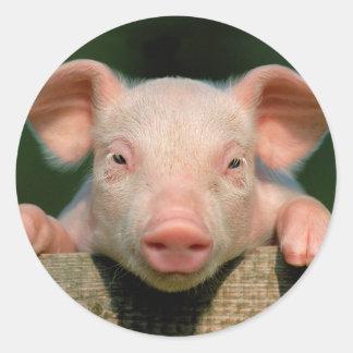 Ferme de porc - visage de porc sticker rond