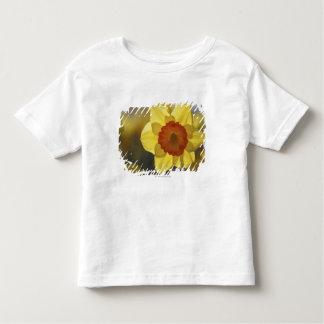 Fermez-vous de jonquille jaune/orange t-shirt pour les tous petits