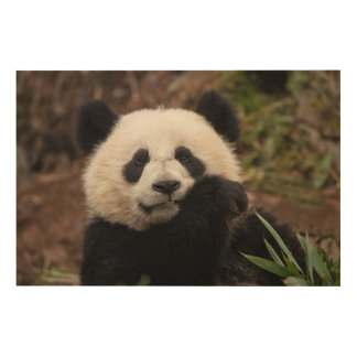 Fermez-vous de la consommation de panda impression sur bois