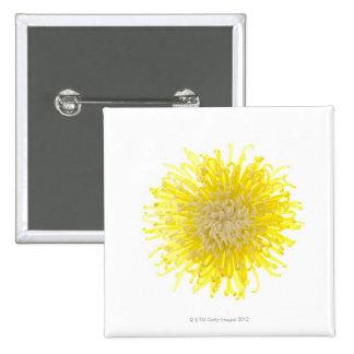Fermez-vous de la tête de fleur de retour allumée badge