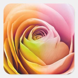 Fermez-vous des pétales de rose colorés sticker carré