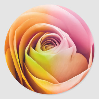 Fermez-vous des pétales de rose colorés sticker rond