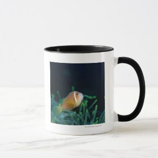 Fermez-vous des poissons d'anémone des Maldives, Mug