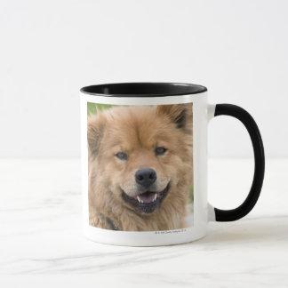 Fermez-vous du chien de mélange de bouffe dehors mugs