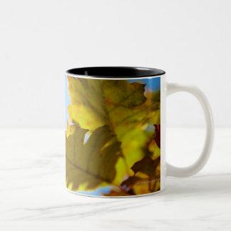 Fermez-vous du feuille jaune d'automne tasse 2 couleurs