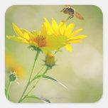 Fermez-vous du vol d'abeille de miel vers le jaune sticker carré