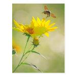 Fermez-vous du vol d'abeille de miel vers le jaune carte postale