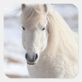 Fermez-vous d'un cheval islandais blanc sticker carré