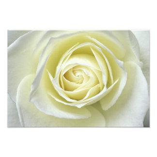 Fermez-vous vers le haut des détails du rose blanc impression photo