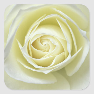 Fermez-vous vers le haut des détails du rose blanc sticker carré