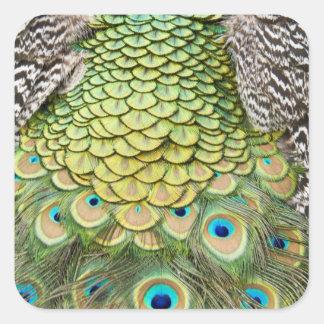 Fermez-vous vers le haut du détail des plumes sticker carré