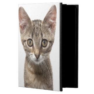 Fermez-vous vers le haut du portrait d'un chaton