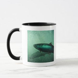 Fermez-vous vers le haut du tir du saumon courant tasse