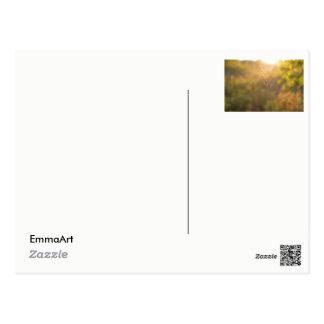 Feuille au coucher du soleil carte postale