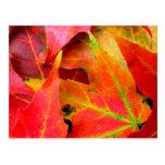 Feuille d'automne coloré en gros plan cartes postales