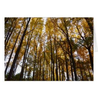 Feuille d'automne dans la nature du matin II le Carte De Vœux