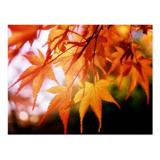 Feuille d'automne dans un bois japonais cartes postales