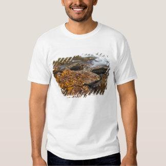 Feuille d'automne le long de crique de psyché dans t-shirt