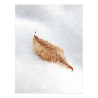 Feuille de hêtre dans une dérive de neige carte postale