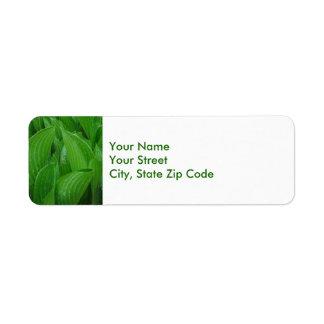 Feuille de Hosta avec les étiquettes de adresse de