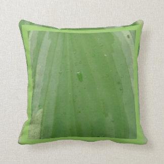 feuille de hosta, coussin vert presque solide