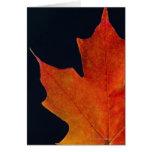 Feuille d'érable d'automne sur l'arrière - plan no carte de vœux