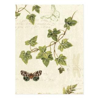 Feuille et un papillon cartes postales