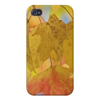 Feuille rouge et jaune d'érable, dans le du sud étui iPhone 4/4S