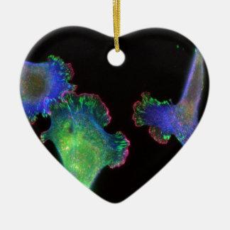Fibroblastes embryonnaires de souris ornement cœur en céramique