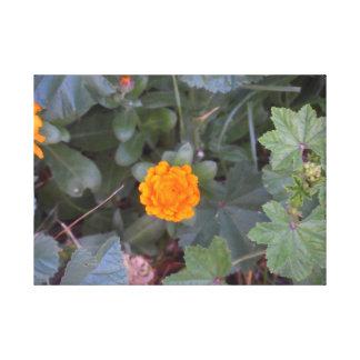 Fierté d'été, art orange de mur de fleur sauvage toile