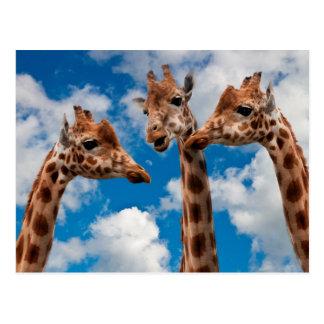 Filles de bavardage de girafe cartes postales