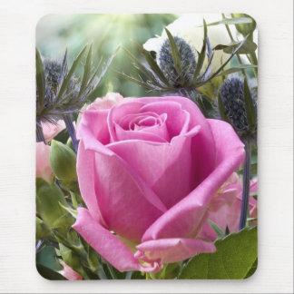 Fin anglaise de rose de rose dans le jardin avec tapis de souris