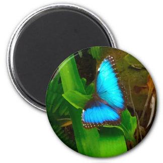 Fin de bleu de papillon aimant