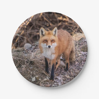 Fin de Fox rouge et personnel Assiettes En Papier