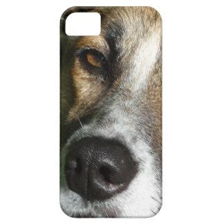 Fin de visage de chien vers le haut de Se d'iPhone Étuis iPhone 5
