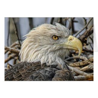 Fin d'Eagle chauve vers le haut de carte de voeux