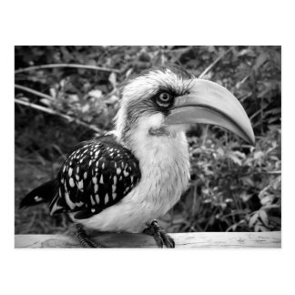 Fin d'oiseau de calao regardant la guerre carte postale