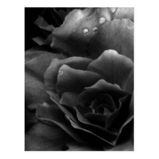Fin noire et blanche d'un double bégonia cartes postales