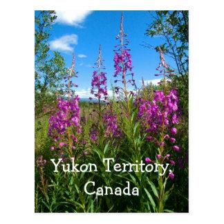 Fireweed du Yukon Cartes Postales