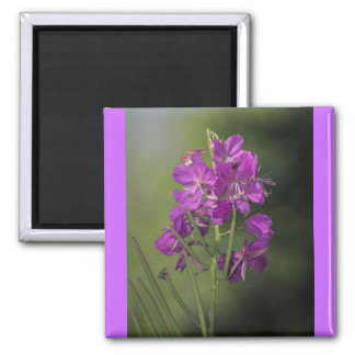 Fireweed Magnet Carré