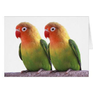 """""""Fischer's Lovebird""""の優良製品 カード"""