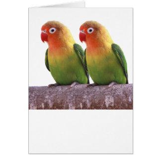 """""""Fischer's Lovebird""""の優良製品 グリーティング・カード"""