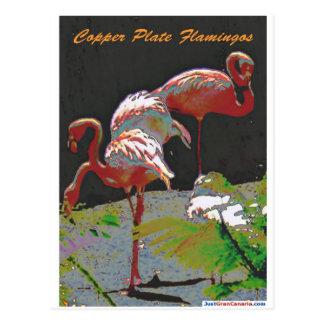 Flamants de plat de cuivre carte postale